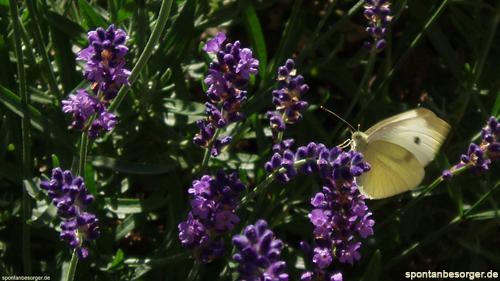 Schmetterling - Hallo Sommer